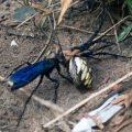 spider_wasp_orbweaver_alan