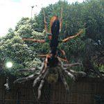 spider_wasp_prey_australia_dom