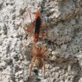 spider_wasp_prey_steve