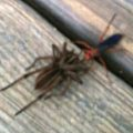 spider_wasp_wolf_spider_lee