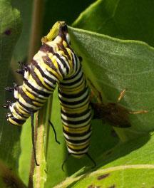 Pest soldier bug zapper