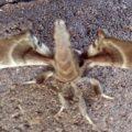 spotted_apatelodes_gatorgirl