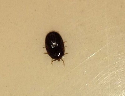 Tick What S That Bug