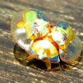tortoise_beetle_costa_rica_punkrockgirl