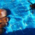 trapdoor_spider_mexico_pool