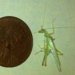 tree_cricket_wasp_nest_maria