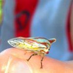 treehopper_nicole
