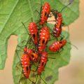 true_bugs_india_hari