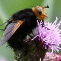 unknown_black_fly_uk_malcolm