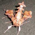 unknown_moth_georgia