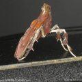unknown_moth_profile_tim