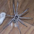 unknown_spider_colorado_nick