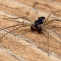 unknown_spider_pete