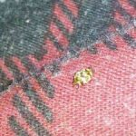 varied_carpet_beetle_rug