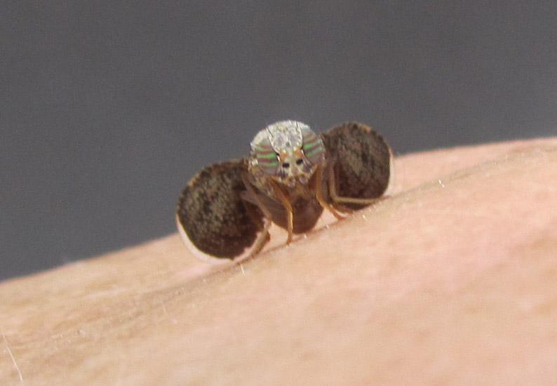 Mouse Deterrent Peppermint Oil Fruit Flies Southern