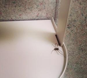 Deadly Bathroom Spider