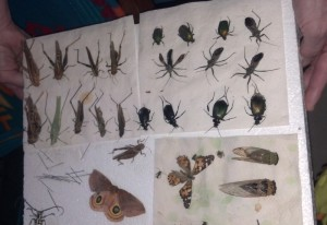 Trevor's Insect Collection