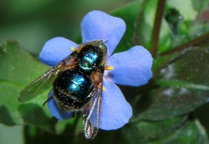 Possibly Small Headed Fly