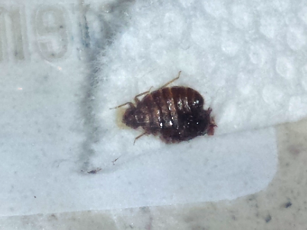 Bed Bug Pillow Case
