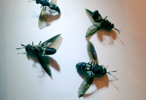 "Window Fly ""Invasion"" ends in Carnage"
