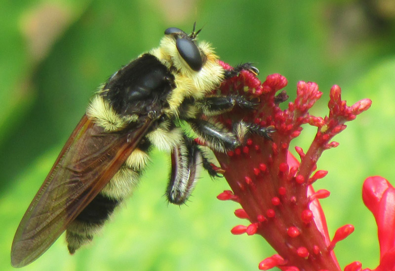 an overview of the killer bee species in africa