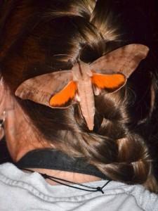 Buggy Accessory:  Coequosa australasiae