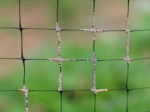 Eggs on Fence