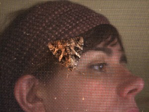 Buggy Accessory:  Walnut Underwing