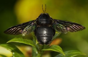 Carpenter Bee, we believe