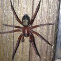 Unknown Spider
