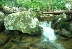Malaysian Stream Habitat