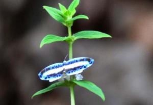 Diurnal Moth we believe