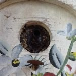 What's Nesting in the Bird House???