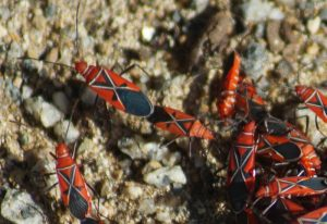 St. Andrew's Cotton Stainers