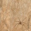 Possibly Huntsman Spider
