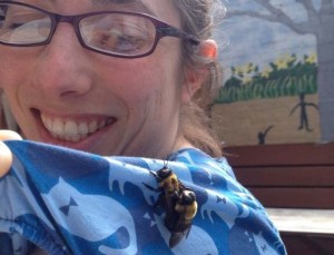 Mating Eastern Carpenter Bees