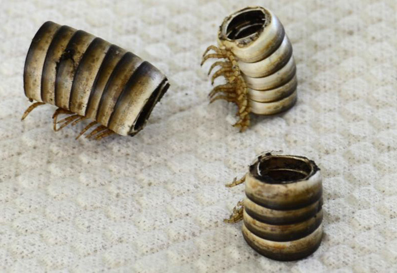 how to kill millipedes and centipedes
