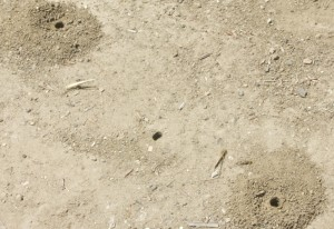 Mining Bee Holes