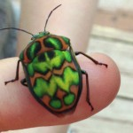 Jewel Bug:  Poecilocoris splendidulus