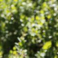 Poorly focused image of greenery