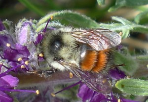 Hunt's Bumble Bee, we believe