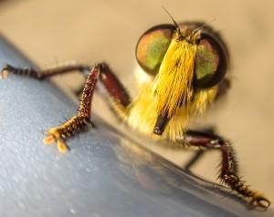 False Bee Killer