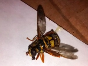 Flower Fly Carnage