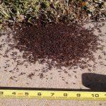 Ant Swarm