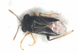 Bug Eyed Bug