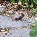 Beetle Larva, we believe