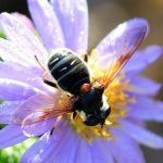 Syrphid Fly, we believe