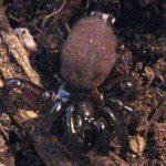 Trapdoor Spider, we believe