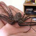 Tailless Whipscorpion allegedly found in Michigan