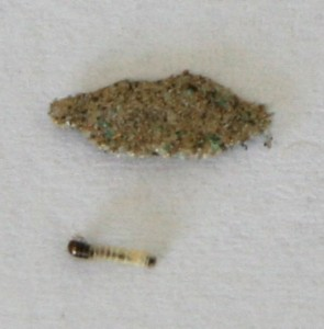 Case Bearing Moth Larva